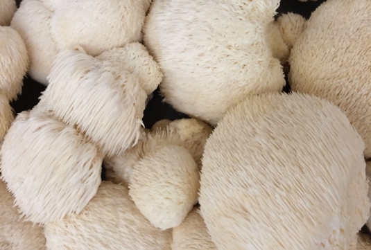 Mushroom Mills lion's mane mushrooms New Pi Eats